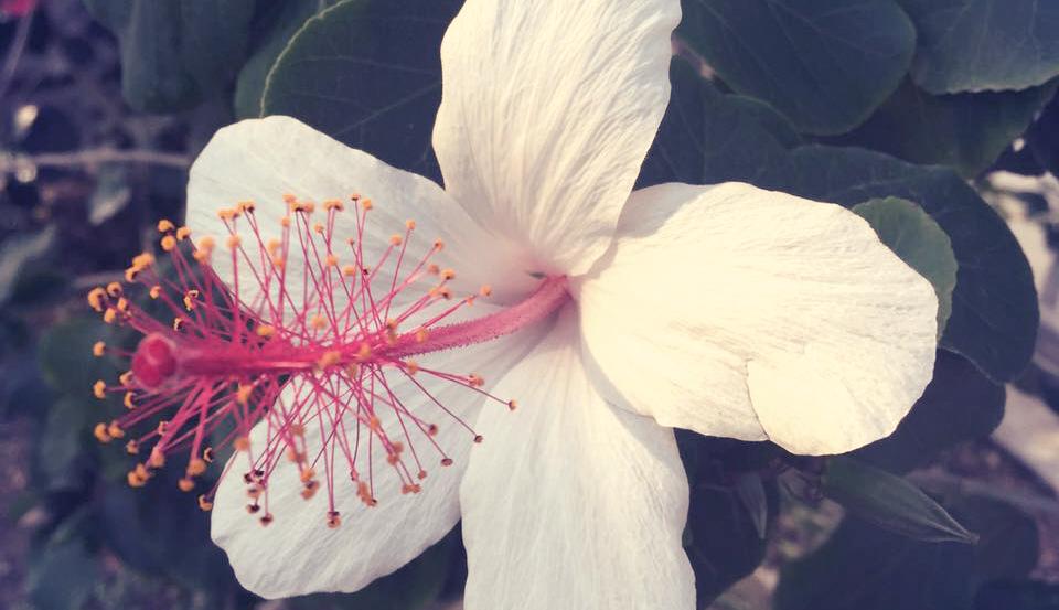咲くやこの花館でフラワーツアーの日