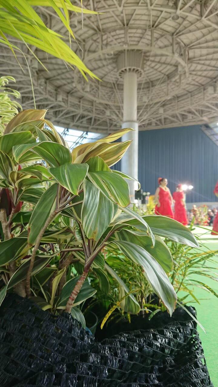 【Hawaiian WAI KULA Days 2020】「開催中止」のお知らせ